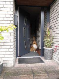 dog2friend d lmen buldern dogsitting. Black Bedroom Furniture Sets. Home Design Ideas